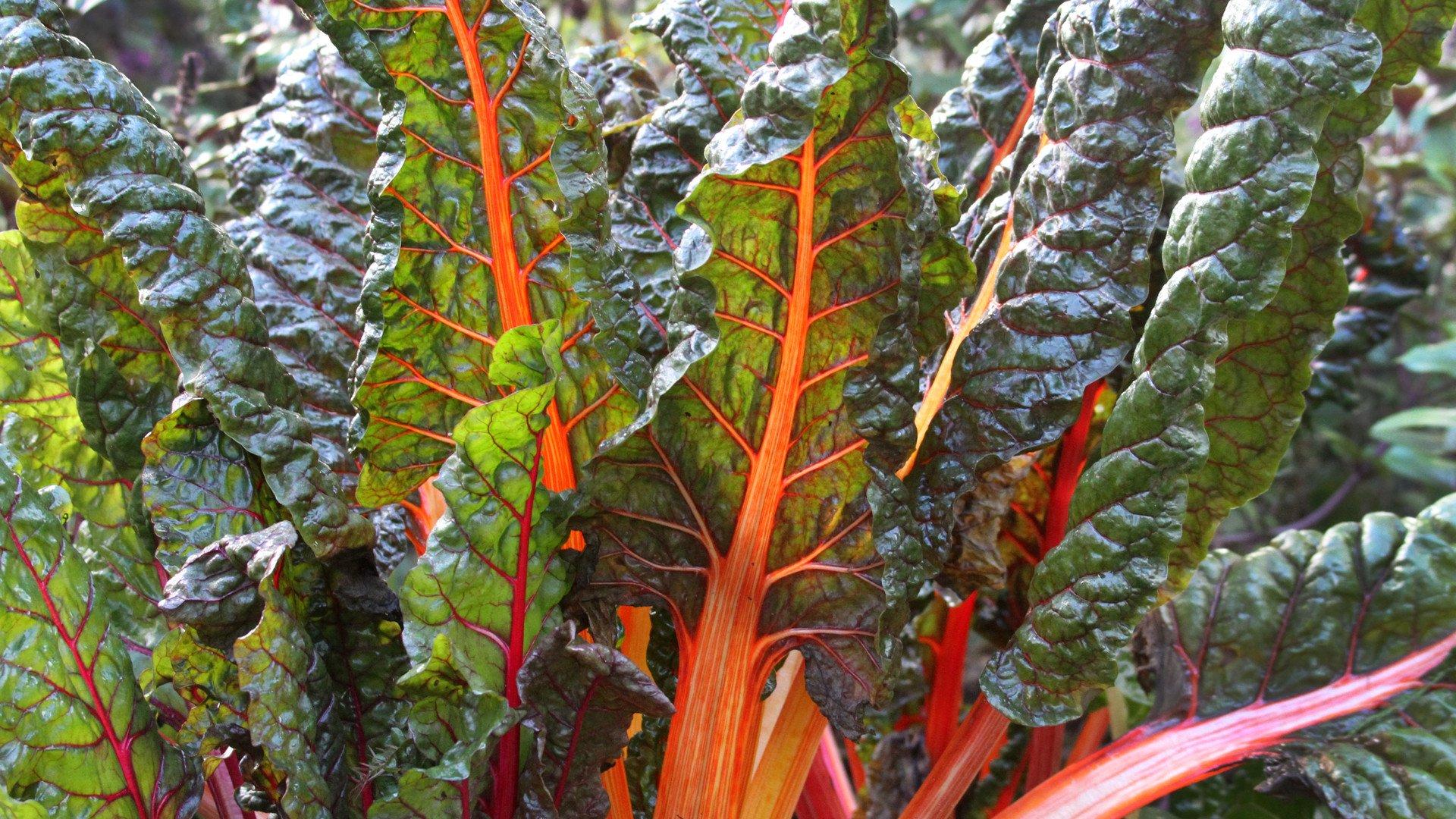 De eetbare tuin for Groenten tuin