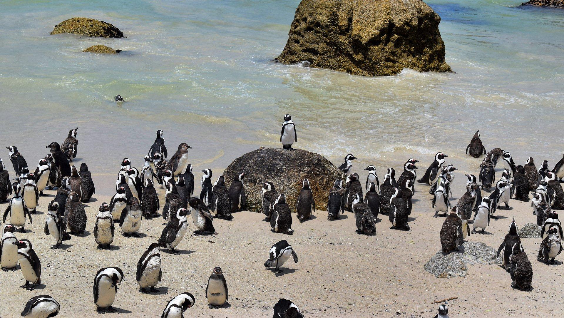 48-52 pinguin_1920x1080.jpg